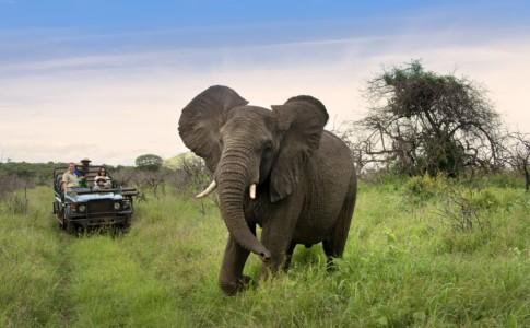 Safari con bambini in Sudafrica