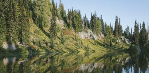 Foreste USA