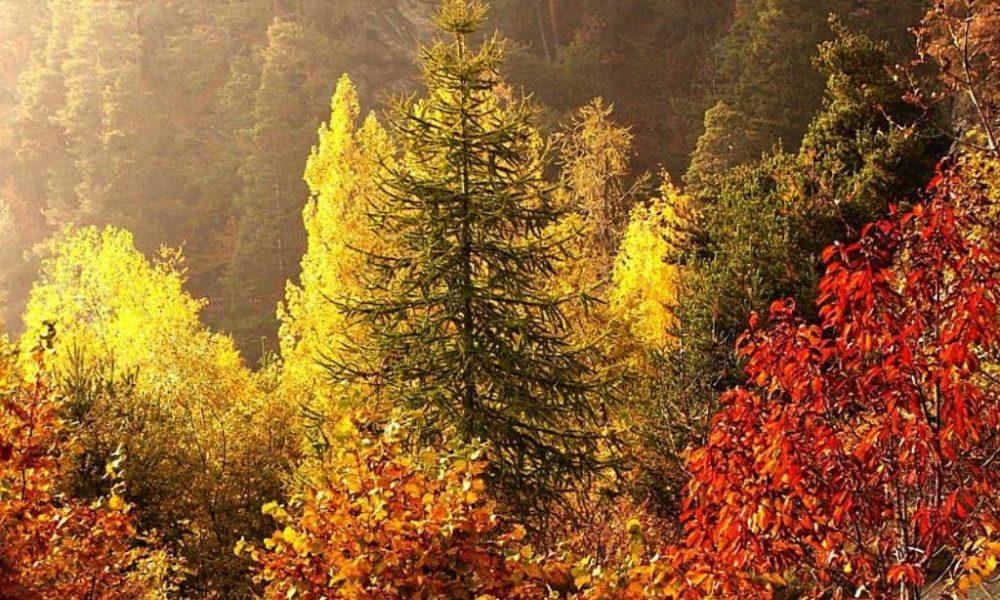 autunno-alberi-valle-d'aosta