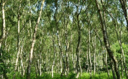 Foresta inglese di Sherwood
