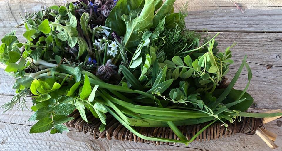 Cuochi d'Italia: le erbe dell'Elba usate da Michele Nardi in trasmissione. Via Visit Elba.