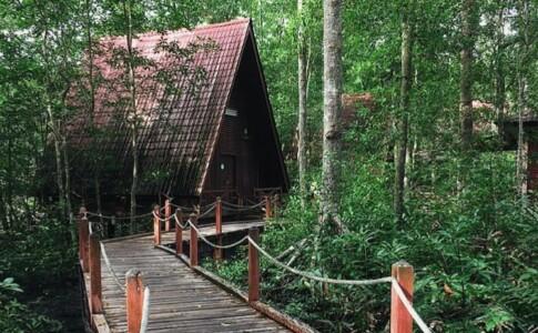 Foresta di Mangrovie di Matang