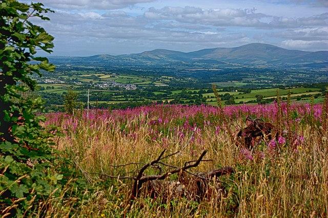 Zona agricola di Carlow, Irlanda orientale. Via Wikimedia Commons.