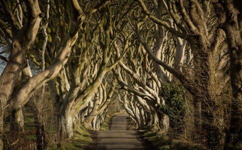 Il Trono di Spade, sentiero alberato