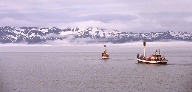 Islanda, escursioni in cerca delle balene. Via Wikimedia Commons.