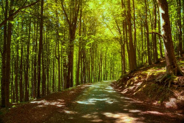 Le Vie di Dante. Foresta casentinese.