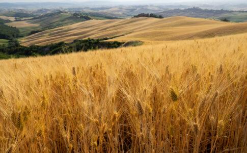Bici: lungo la Via Francigena, tratta senese. Via Terre di Siena.