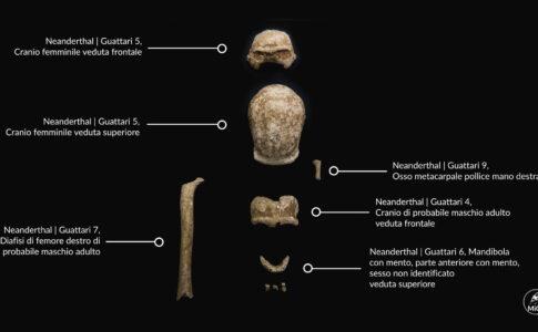 Neanderthal Foto: Emanuele Antonio Minerva