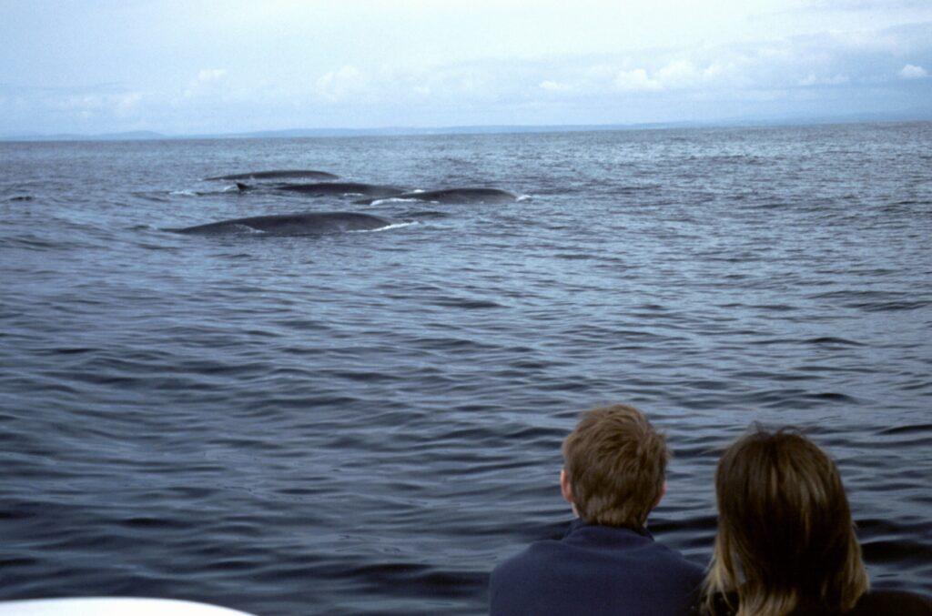 Whale watching lungo la Wild Atlantic Way. Via Tourism Ireland.