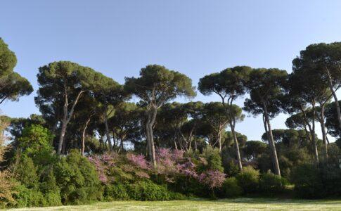 Parco Roma, Villa Ada Savoia