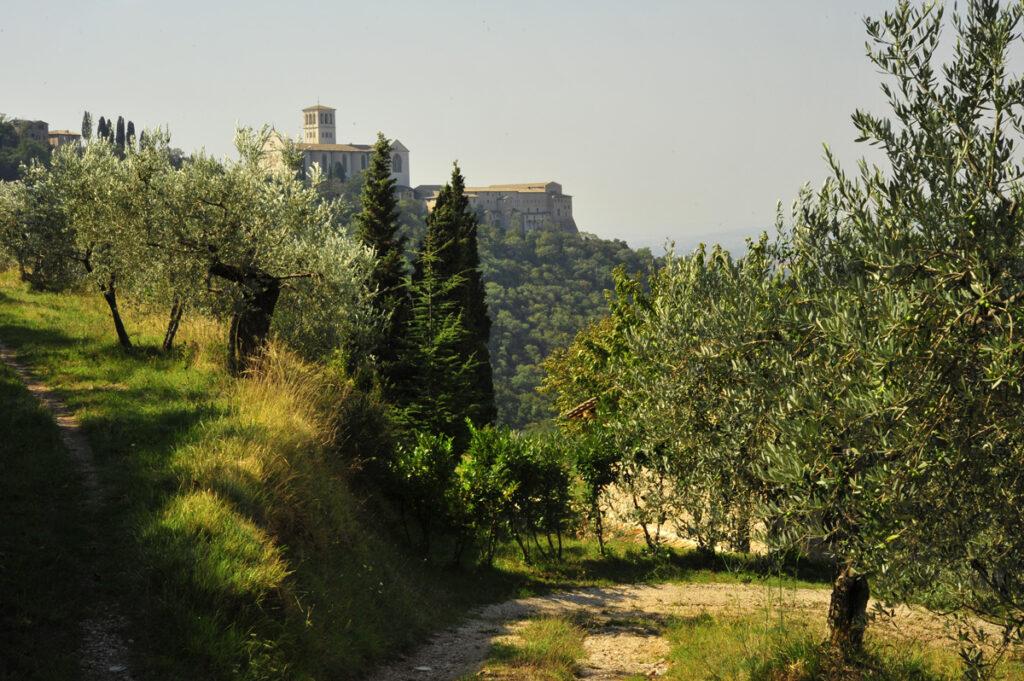 Bosco di San Francesco, Assisi PG - Foto di Maja Galli, 2009 © FAI