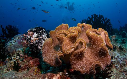 maldive barriera corallina via wikimedia commons