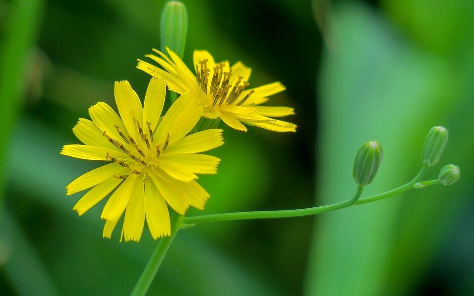 Natura, fiore, parco