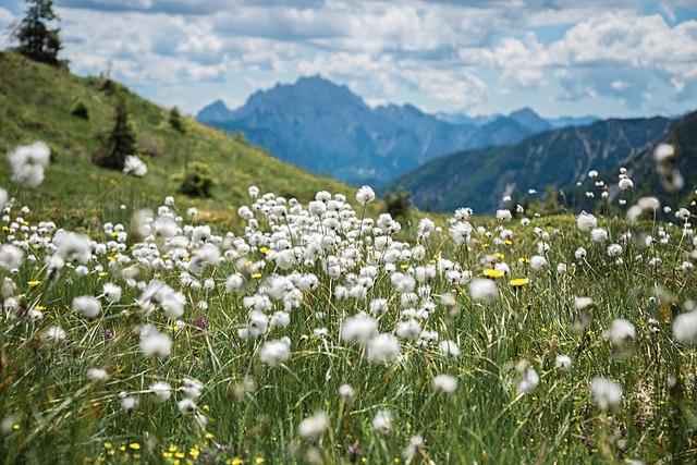 Montagna, trekking