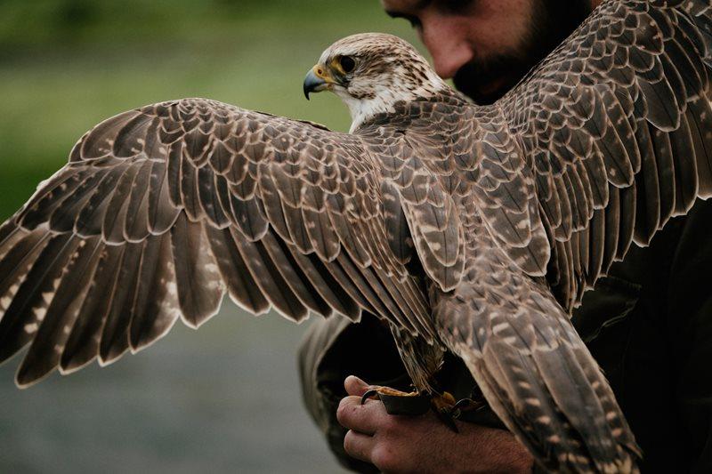 Eagles Flying via tourism ireland