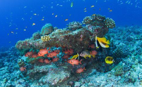 diving via seychelles travel