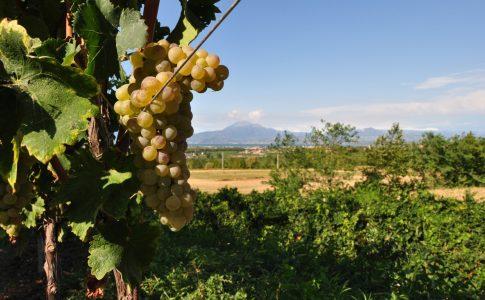 Brescia Strada del vino Fonte: Visit Brescia