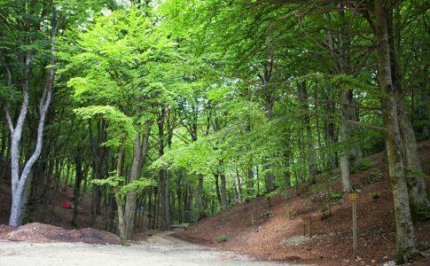 Parco del Monte Cucco Fonte: Umbria Tourism