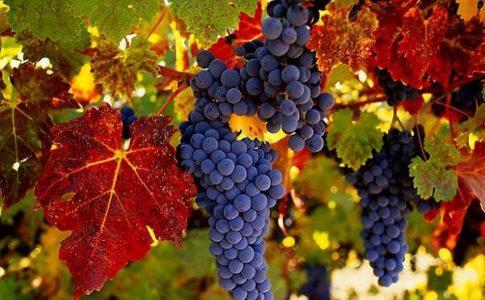 Vini Siciliani Fonte: Visit Sicily