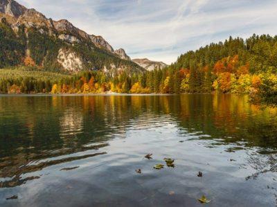 Foliage in Trentino