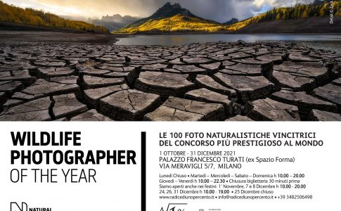 Wildlife Photographer of the year locandina