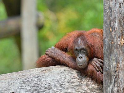 fauna malesia via malaysia travel