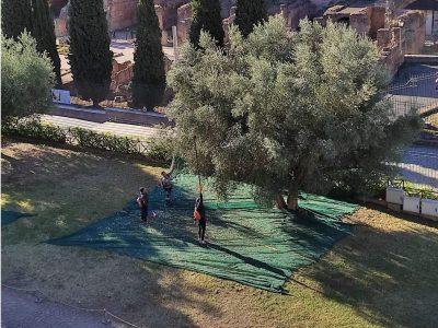 olio antichi romani via parco